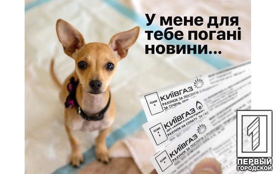 Елітний пес як спосіб порятунку національної економіки