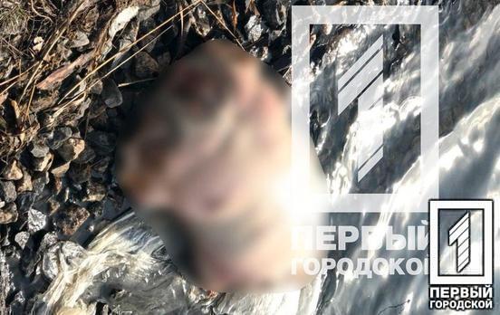 Расчлененное тело женщины разбросал по всему Кривому Рогу: подозревают мужчину 78-лет (Фото/Видео)