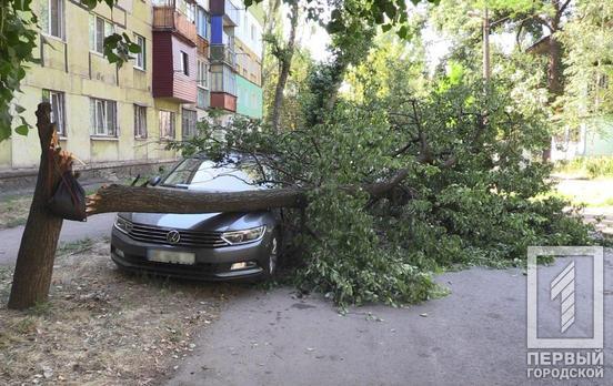 Помят капот, крыло и дверь: в Кривом Роге дерево упало на машину